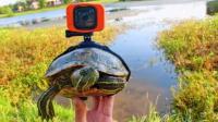 把相机绑在乌龟身上,没想到可以看到这么有趣的水下世界!