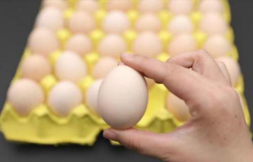 同样是鸡蛋,选大的好还是小的好?老农教一招,提醒家人别买错了
