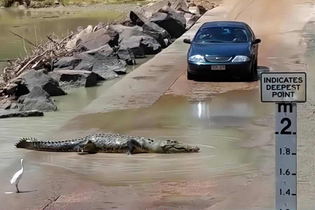 男子在路上遇到惊险一幕,直接就把车停下,丝毫不敢乱动!