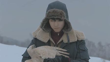 天坑鹰猎:菜瓜要带白鹰上悬崖,张保庆舍不得,白鹰自己飞走了