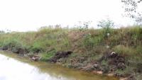 小河沟经常传来动静,玩伴们相约一起去捉鱼