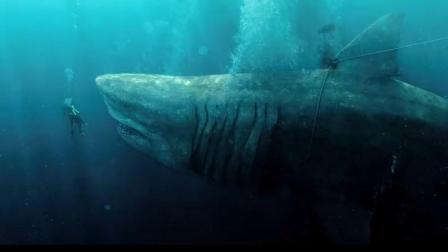 地球史上最强生物《巨齿鲨》,沧龙第二,霸王龙只排第三