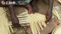 印度农村编竹工艺,手速快的让人眼花缭乱