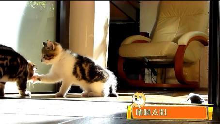 猫咪的存在就是让人类感到幸福,忘记一切烦恼就是因为有你们!