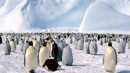 卫星真不靠谱, 这150万只企鹅, 在这藏了2800年都没被发现!