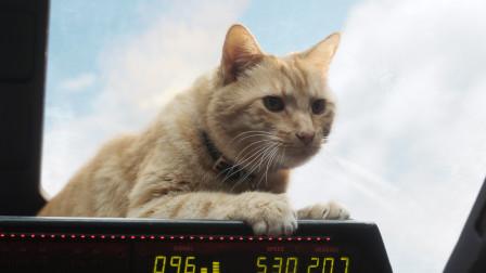 《惊奇队长》观影感受,猫星人出戏又喜又萌,战机对抗像电玩