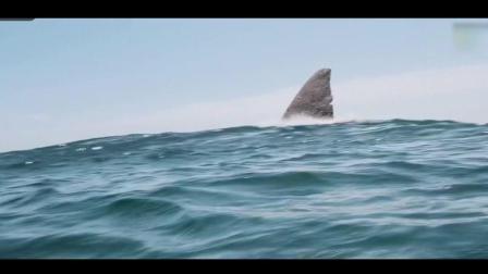 杰森斯坦森海中勇斗巨齿鲨