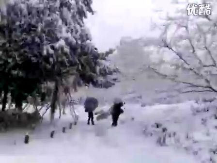 杭州雪破纪录 雪中西湖 1