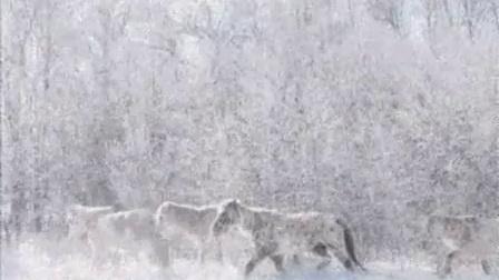 2015年最佳超短故事片电影《野马》全片在线观看