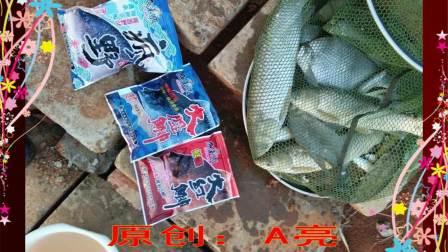 满江红鱼来顺图片视频