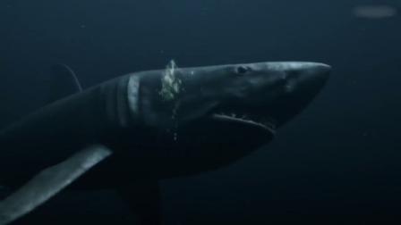 潜水艇炮轰巨齿鲨,接连打中两次,刚要嘚瑟结果被大乌贼给困住!