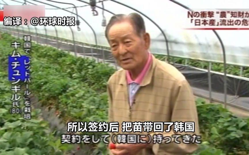 日本冰壶队员称赞韩国草莓香甜 却被发现是韩国从日本盗来的...