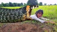 农村姐妹俩胆大如虎,土坎上找蛇洞捉蛇补贴家用