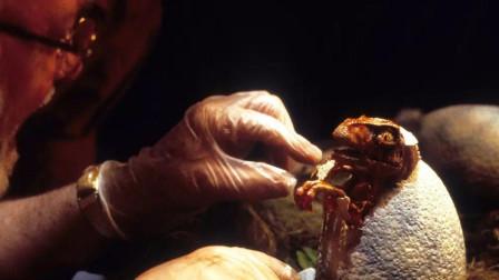 用蚊子血复活恐龙, 在现实中有可行性吗? 第一步都很困难!