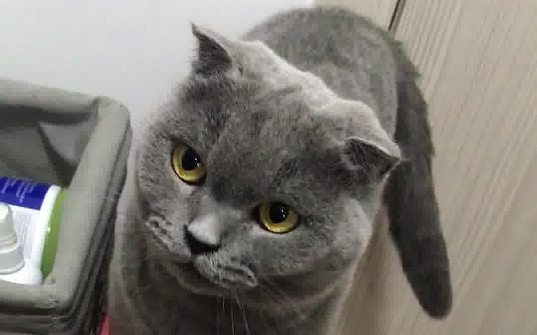 喵喵喵?我的猫哥哥呢?