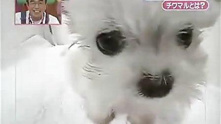 小狗<a href鈥漺ww.baidu.com鈥>baidu<a>