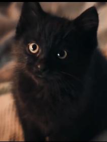 带来幸运的黑猫
