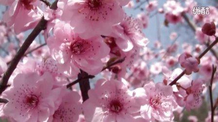 铁岭龙山桃花三部曲之三 音画欣赏 《 三月桃花雨》