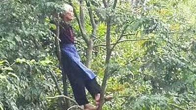 65岁阿婆爬树看比赛