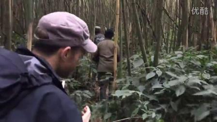 iPhone 7评测视频-卢旺达野生大金刚猩猩
