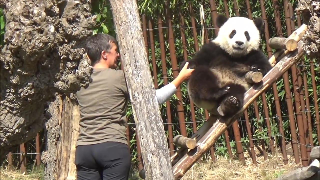 【比利时天堂动物园】被宠成小赖皮的天宝日常