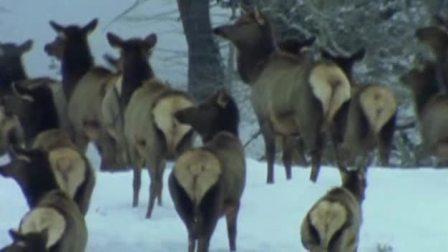 动物大战-动物世界杀戮战场-狼群狩猎现场