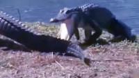 两只鳄鱼在岸上晒太阳,下一秒出现可怕的一幕!
