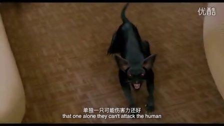 蒸发太平洋 除了宫崎骏的龙猫外,这些猫同样震惊世界!