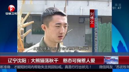 超级新闻场 2018 辽宁沈阳 大熊猫荡秋干 憨态可掬惹人爱
