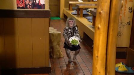 日本最火爆的餐馆之一, 猴子在这里工作30年, 报酬只要香蕉!