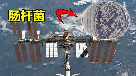 国际空间站发现病菌, 致病可能性达79%, 可能会影响宇航员健康!
