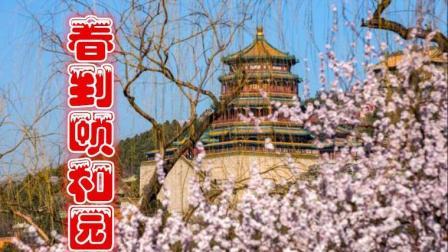 """颐和园, 西堤""""十里桃花"""" 盛开, 繁花似锦"""