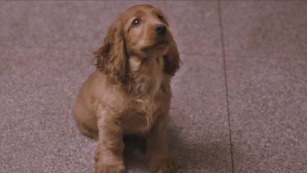 《狗十三》准确地抓住了我们什么时候突然长大那一刻