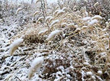 牛年以来最大规模雨雪上线!