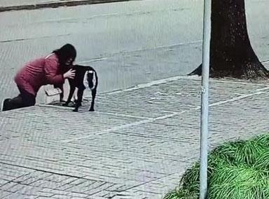 视障阿姨因导盲犬排尿被邻居投诉