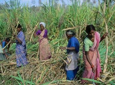 4万印度女性开始向德里进发