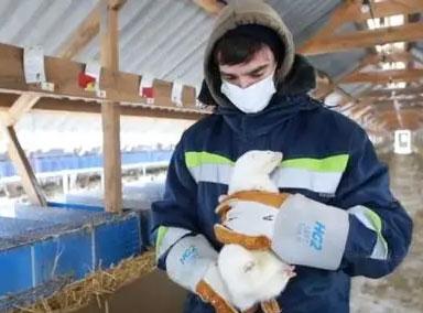 俄罗斯注册全球首款兽用新冠疫苗