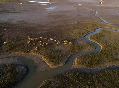 美索不达米亚湿地污染严重