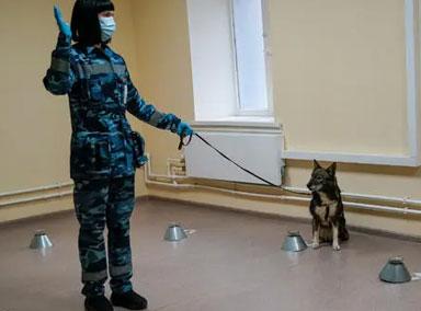 泰国训练嗅探犬探测新冠病毒