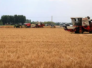 农业农村部:今年夏粮再获丰收
